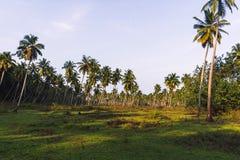 haut palmier luxuriant, beaucoup d'arbres, sur un gisement de colline verte, Photographie stock libre de droits
