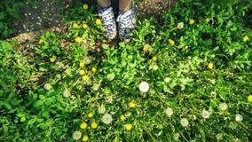 Haut-parleurs et herbe colorés Photo libre de droits