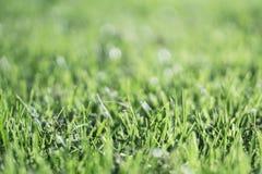 Haut proche d'herbe image stock