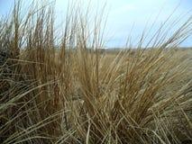 Haut proche d'herbe Image libre de droits