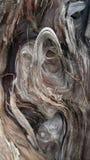 Haut proche de bois de flottage Photos libres de droits