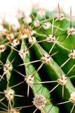 Haut proche de cactus Photos libres de droits