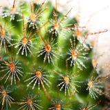Haut proche de cactus Image libre de droits