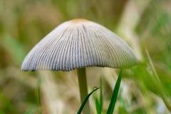 Haut proche de champignon de couche Image libre de droits