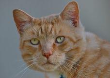 Haut proche de chat Photographie stock