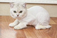 Haut proche de chat Image stock