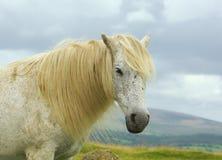 Haut proche de cheval Photo libre de droits