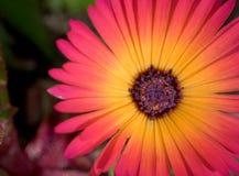 Haut proche de fleur Images stock