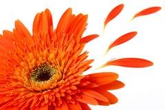 Haut proche de fleur Image libre de droits