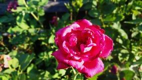 Haut proche de fleur Photo stock