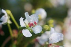 Haut proche de fleur Photos libres de droits