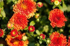 Haut proche de fleur Photographie stock