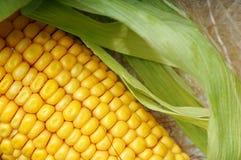Haut proche de maïs Photographie stock