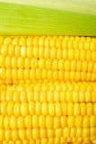 Haut proche de maïs Photos libres de droits