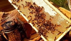 Haut proche de nid d'abeilles images stock
