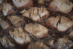 Haut proche de palmier image libre de droits