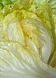 Haut proche de salade photographie stock