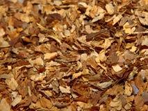 Haut proche de tabac Images stock