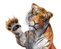 Haut proche de tigre, faisant face au visualisateur. Photo libre de droits