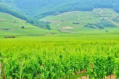 Haut Rhin malownicza wioska kientzheim w Alsace Zdjęcia Royalty Free