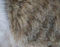 Haut streichelt Katzen stockbild