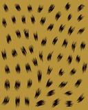 Haut von Leoparden 2 Stockbilder