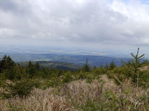Haute colline boisée Photos stock