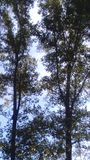 Haute dans les arbres Photo stock