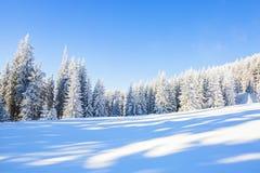 Haute dans les arbres verts de montagnes, couverts de neige Photo libre de droits