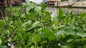 Haute densité de jacinthes d'eau sur un canal banque de vidéos