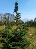 haute forêt de 4k Rocky Mountain avec des fleurs pendant l'été et l'arbre Images stock