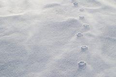 Haute lättnad av tafsar tryck, i att blåsa snö Starka vindar har eroderat den lösa snön runt om pressad samman tafsar tryck royaltyfria bilder