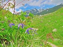 Haute route alpestre de Grossglockner Photo libre de droits