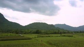 Hautes collines couvertes de hausse vert-foncé de forêt au-dessus des champs clips vidéos