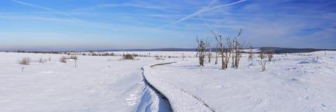 Hautes Fagnes在比利时在冬天在一个晴天 免版税库存照片