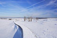 Hautes Fagnes在比利时在冬天在一个晴天 库存图片