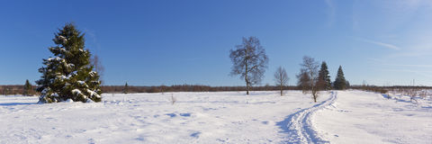 Hautes Fagnes在比利时在冬天在一个晴天 库存照片