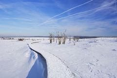 Hautes Fagnes in Belgium in winter on a clear day Stock Images