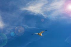 Hautes mouettes blanches volantes de ciel bleu planant au-dessus de la mer Image libre de droits