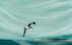 Hautes mouettes blanches volantes de ciel bleu planant au-dessus de la mer Photographie stock