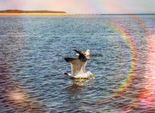Hautes mouettes blanches volantes de ciel bleu planant au-dessus de la mer Images libres de droits