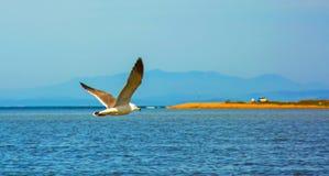Hautes mouettes blanches volantes de ciel bleu planant au-dessus de la mer Photographie stock libre de droits