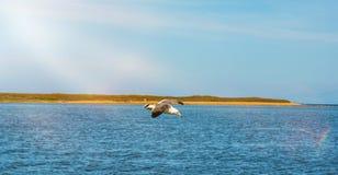 Hautes mouettes blanches volantes de ciel bleu planant au-dessus de la mer Photo stock