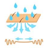 Hauthydratation und -falte Stockfotos
