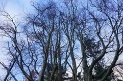 Hauts arbres Image libre de droits
