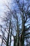 Hauts arbres Photos stock