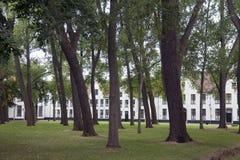 Hauts arbres dans la cour du beguinage dans la ville flamande Bruges à b Photographie stock libre de droits