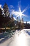 Hauts arbres de pin sur le lac figé sous le ciel bleu Image stock