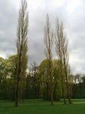 Hauts arbres en parc et ciel nuageux Photo libre de droits