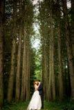 Hauts arbres et baiser du marié Photo stock